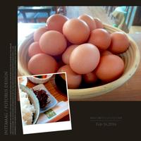 オクノさんちの卵。