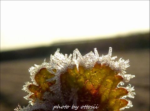 ある冬の朝