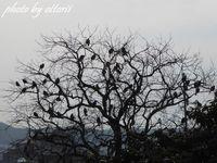 鳥の生る木