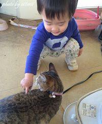 孫ちゃん猫と出会う