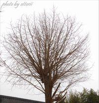 推定樹齢100年