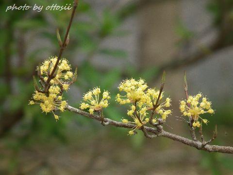 日岡山の花(後篇)