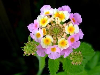 この花なぁに?