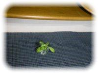 テーブル席からカウンター席への発想の転換 (プチ改造☆ビフォーアフター 2016.9 LD編)