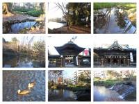三島散策の朝 2016 (12/23)