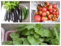 夏野菜のシーズン 2017
