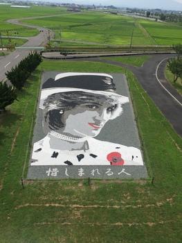 田んぼアート 2018/07/22青森県田舎館村
