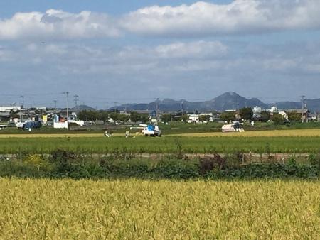稲美町、志方町の田んぼでも収穫が始まりました!
