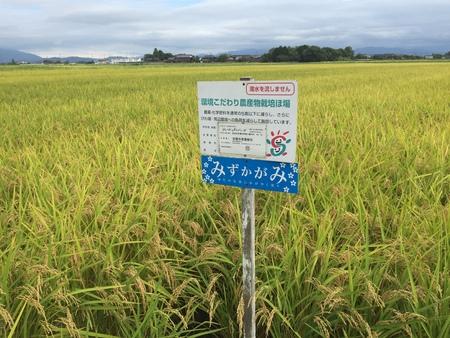 こんなお米も栽培されていました! ~2016/08/27 滋賀県長浜市 落庄商店~
