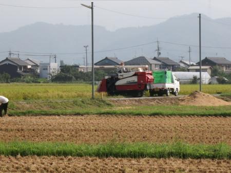 ただいま収穫中!! ~2014/09/06 滋賀県長浜市~