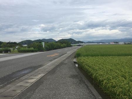 先週7/9に訪れた、高知の田んぼです!