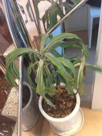 お店の中の植物のお話し