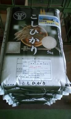 野沢コシ売り切れにつき、長野県安曇野産コシを販売!