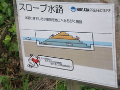 朱鷺の野生復帰のために 新潟・佐渡産地視察リポート(2)