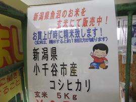 新潟県魚沼コシヒカリの新米、玄米にて発売!