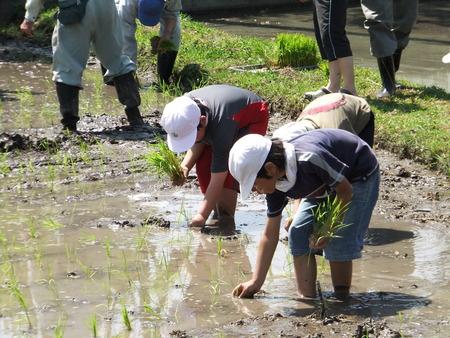 豊作を祈って、今年も田植え!~別府西小4年生米作り~