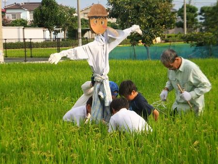 案山子立て ~別府西4年生米作り~