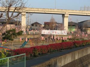春が、キターーー!!