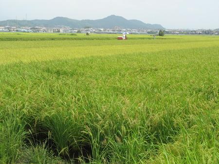 龍馬が育った高知のお米~2010/07/31JA全農こうち