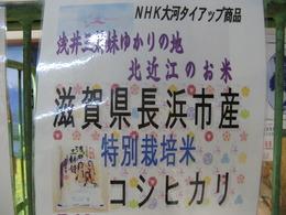 NHK大河「江」ゆかりの地、北近江のお米