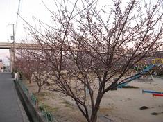 桜が咲き始めました(^O^)
