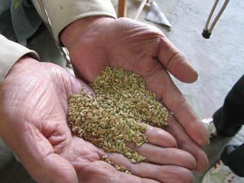 籾すり見学
