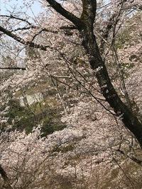 篠山城にて
