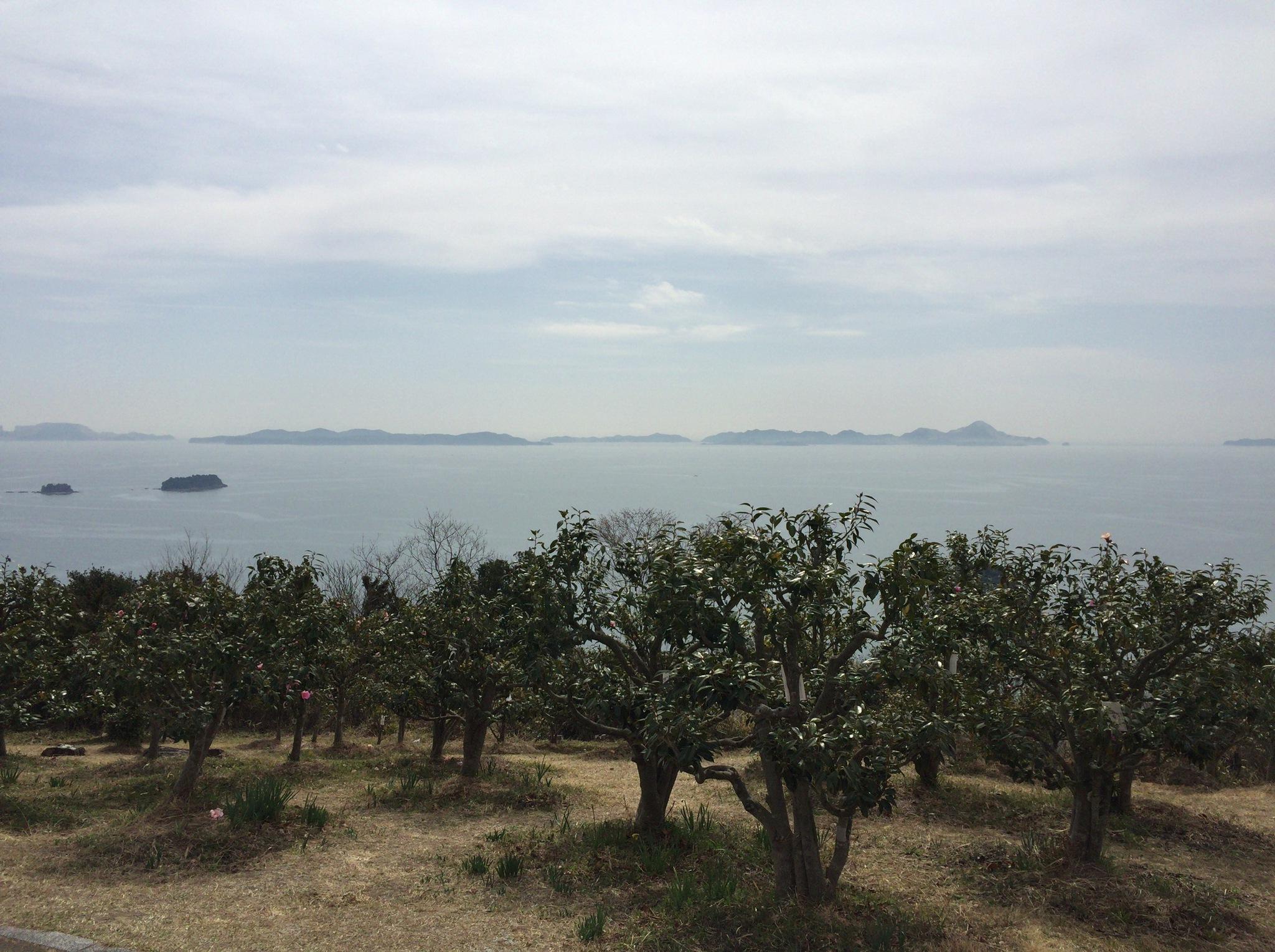 相生市☆万葉の岬つばきまつり に行ってきました♪