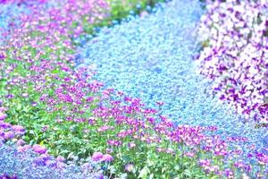 さまざまな色の花々