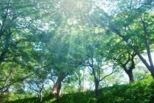 木々から漏れる光