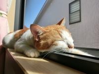 「世界猫の日」