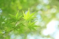 翡翠色の森  -雫のゆくえ-