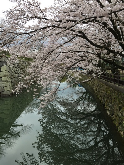 桜めぐり~