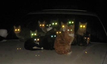 猫の目が・・・