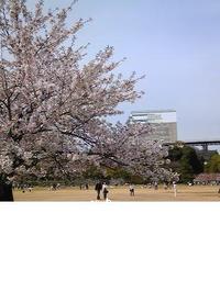 お花見in姫路