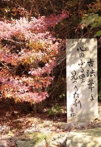古法華自然公園 2009/11/07 20:57:51