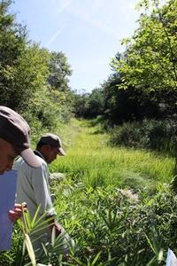 湿地調査 2010/08/29 20:17:16