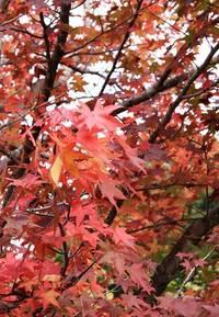 秋の紅 2009/10/25 19:26:09