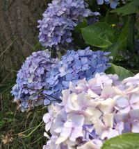 花盛り 2009/07/04 11:18:03