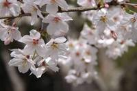 春色を捜しに 2010/04/04 15:22:50