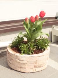 春ですね~!!!