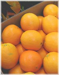 いただきもののオレンジ