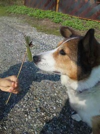 愛犬の緊急入院
