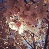 春の月いち▲じりき整体