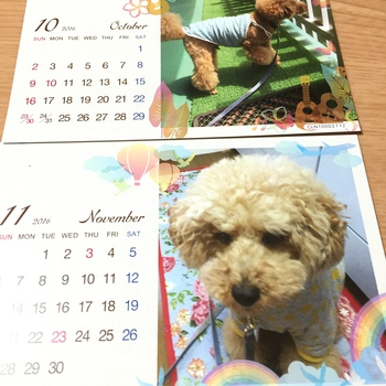 ブログ本&カレンダー