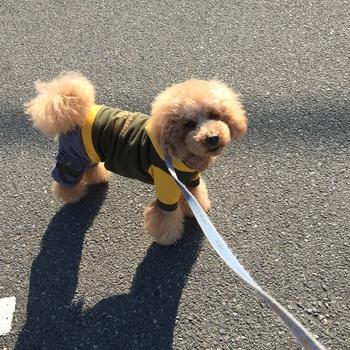 〇〇港初散歩