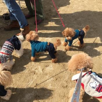 犬のじゅうたんフェスタ2016