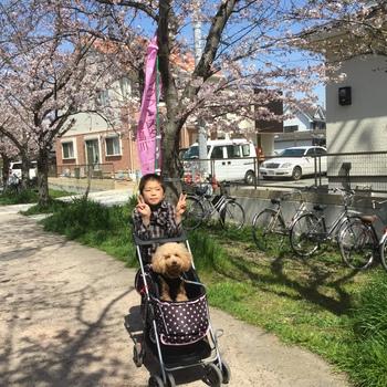 春が来たー