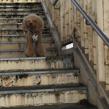 階段上りましたー