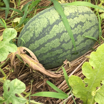 貸農園の野菜たち